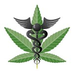 The Effect of Minnesota's Medical Marijuana Law on Patients And Employers